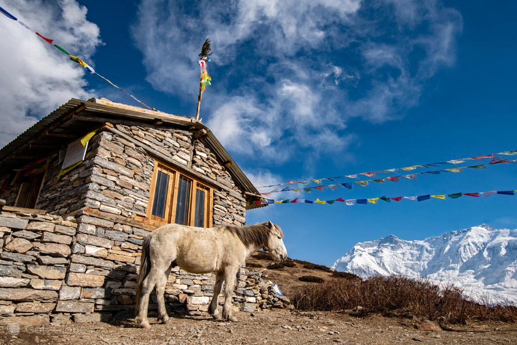 Cavalo do dono do Ice Lake Restaurant, a caminho do Ice Lake, Circuito Annapurna, Nepal
