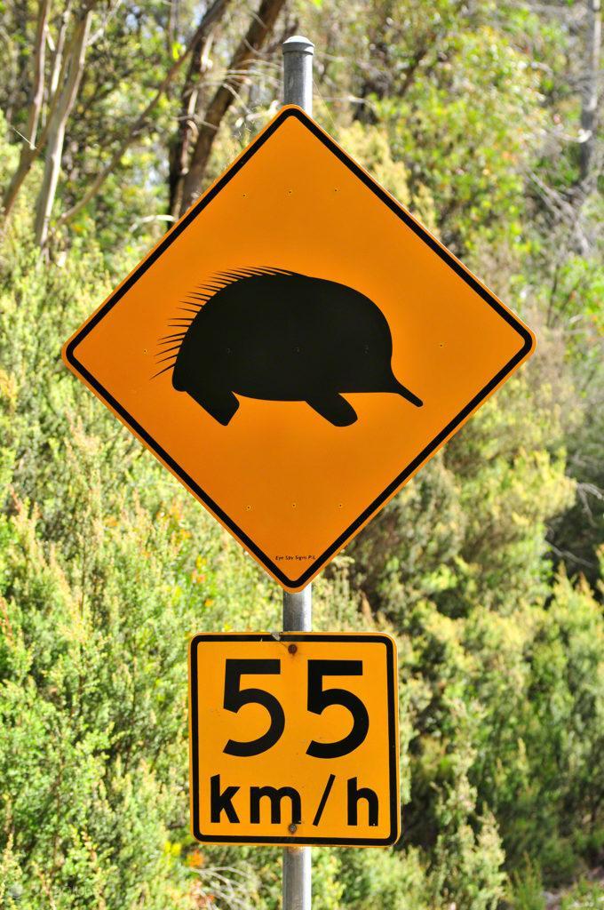 Sinal de alerta de passagem de equidnas, Tasmânia, Austrália