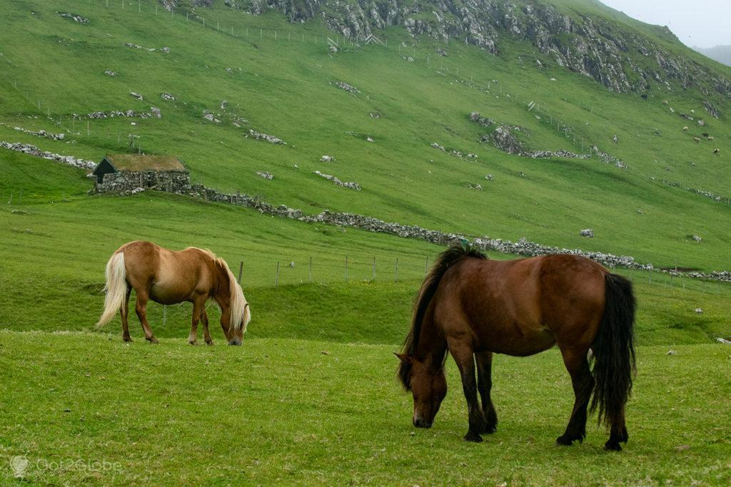 Cavalos em Mykines, Ilhas Faroé