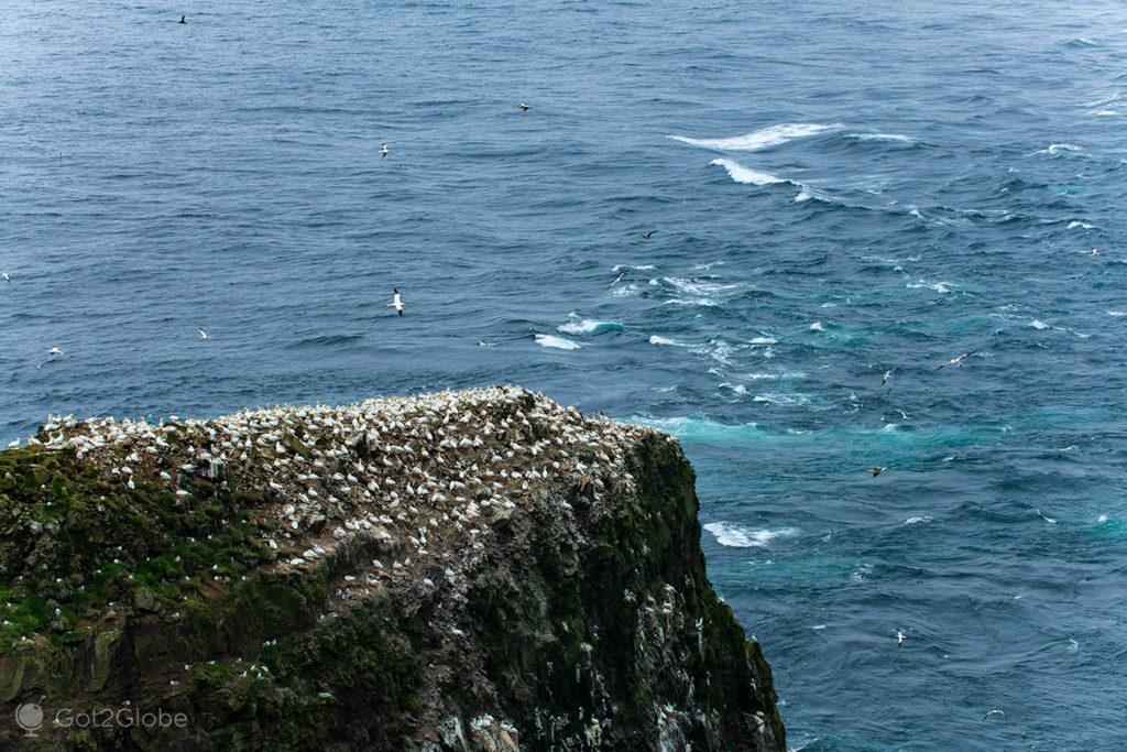 Colónia de aves e mar revolto em Mykinesholmur, Ilhas Faroé