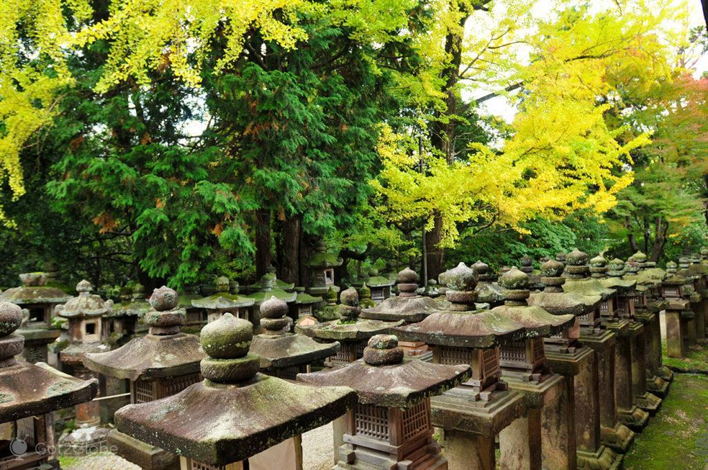 Lanternas de pedra do Santuário Kazuga, Nara, Japão