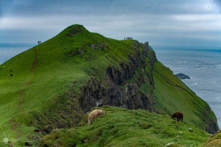 Ovelhas e caminhantes em Mykines, ilhas Faroé