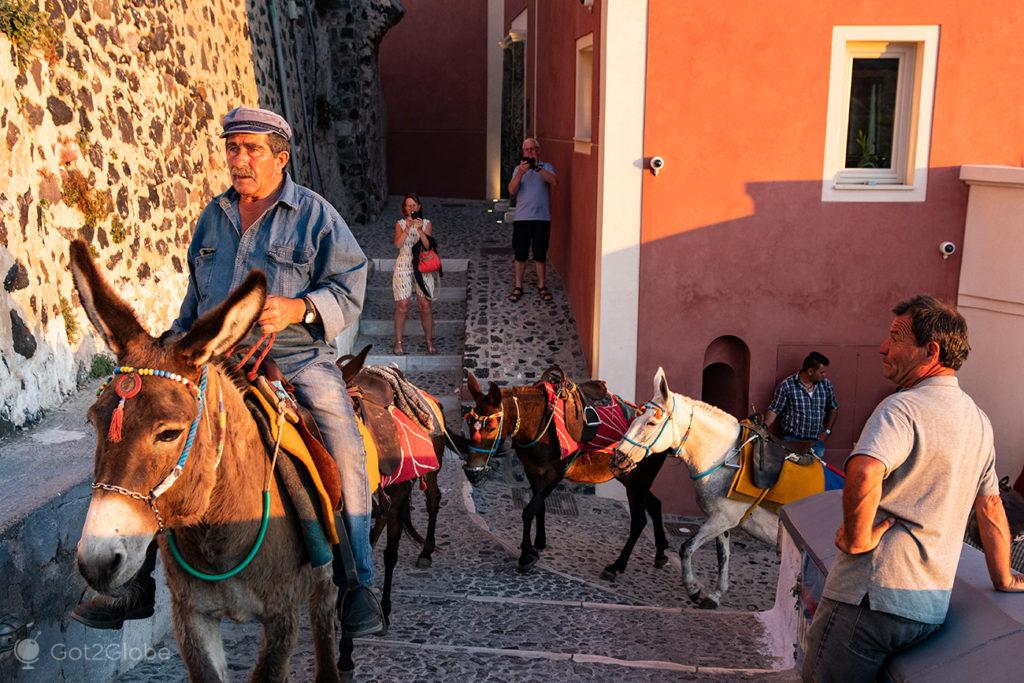 Burros-taxi em Thira, Santorini, Grécia
