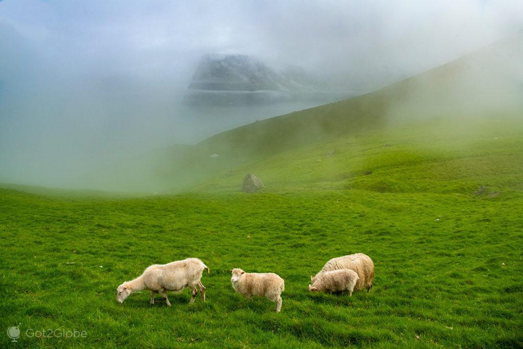 Ovelhas, Kallur, Kalsoy, Ilhas Faroé