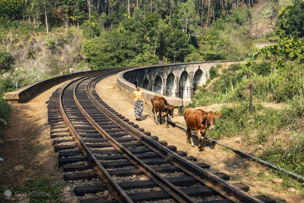 Camponesa e vacas, Nine Arches Bridge, Sri Lanka