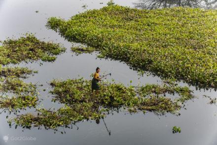 Camponesa, Majuli, Assam, India