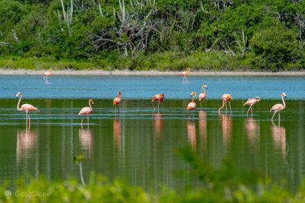 Bando de flamingos, Laguna Oviedo, República Dominicana
