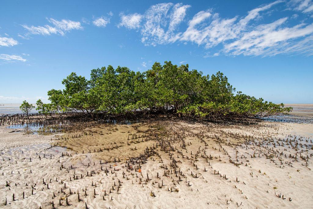 Pequeno Mangal, ilha Quirimba, Moçambique