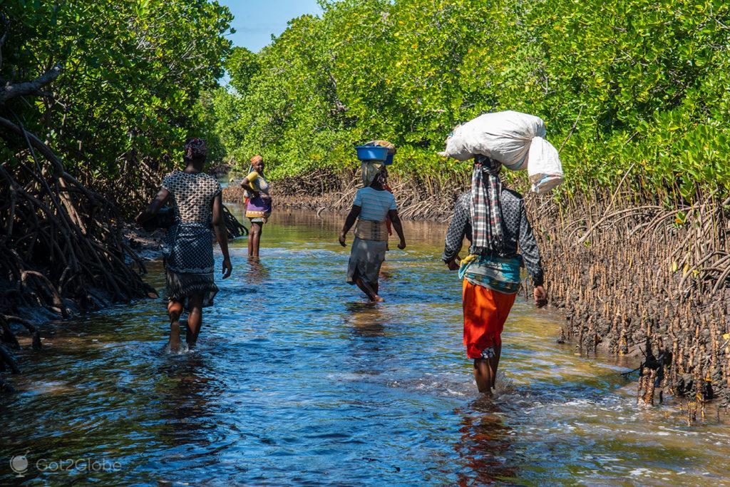Mangal entre Ibo e ilha Quirimba-Moçambique