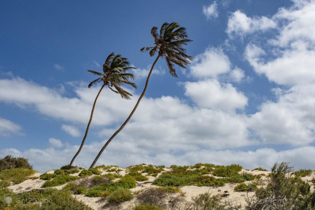 Coqueiros, Ilha da Boa Vista, Cabo Verde, Sal a Evocar o Sara