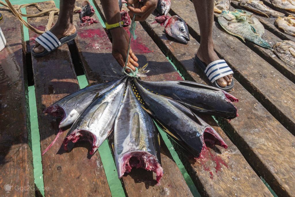 Santa Maria, ilha do Sal, Cabo Verde, peixe