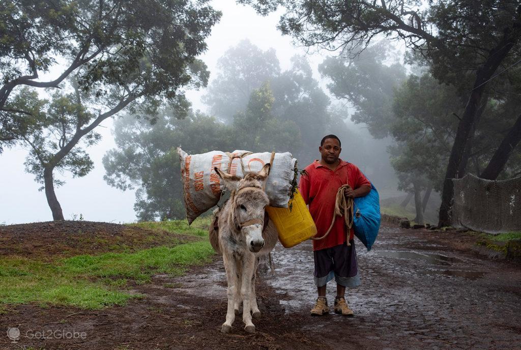 Burrico carregado, Santo Antão, Cabo Verde