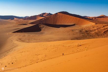 Caminhada Solitária, Deserto do Namibe, Sossusvlei, Namibia, acácia na base de duna