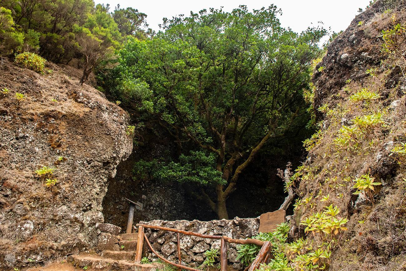Árvore Garoé, El Hierro, Canárias, Espanha
