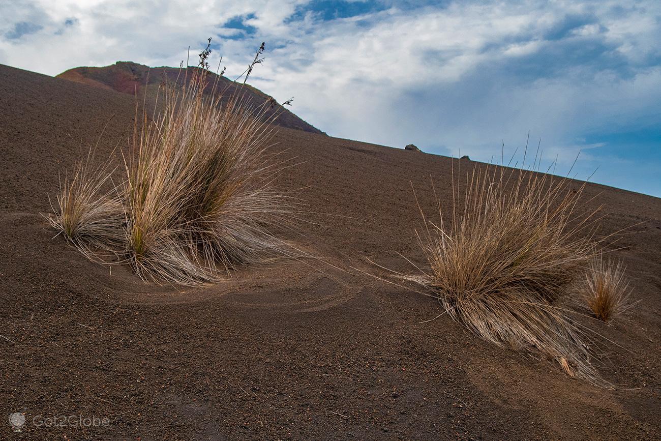 PN Timanfaya, Montanhas de Fogo, Lanzarote, arbustos