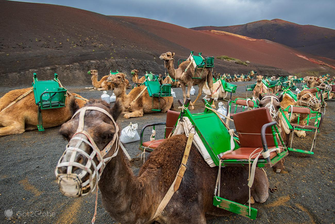 PN Timanfaya, Montanhas de Fogo, Lanzarote, Echadero de los Camellos