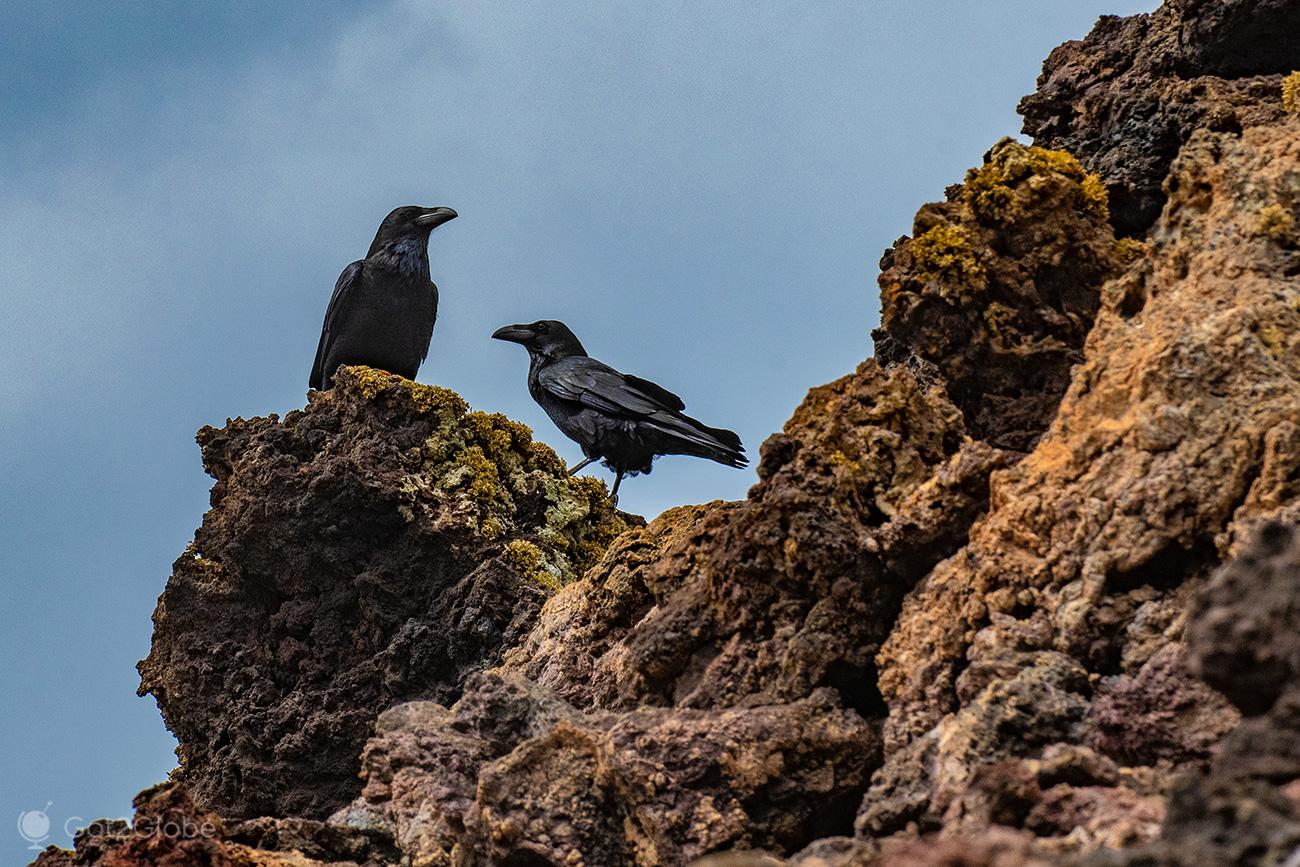 PN Timanfaya, Montanhas de Fogo, Lanzarote, duo de Corvos
