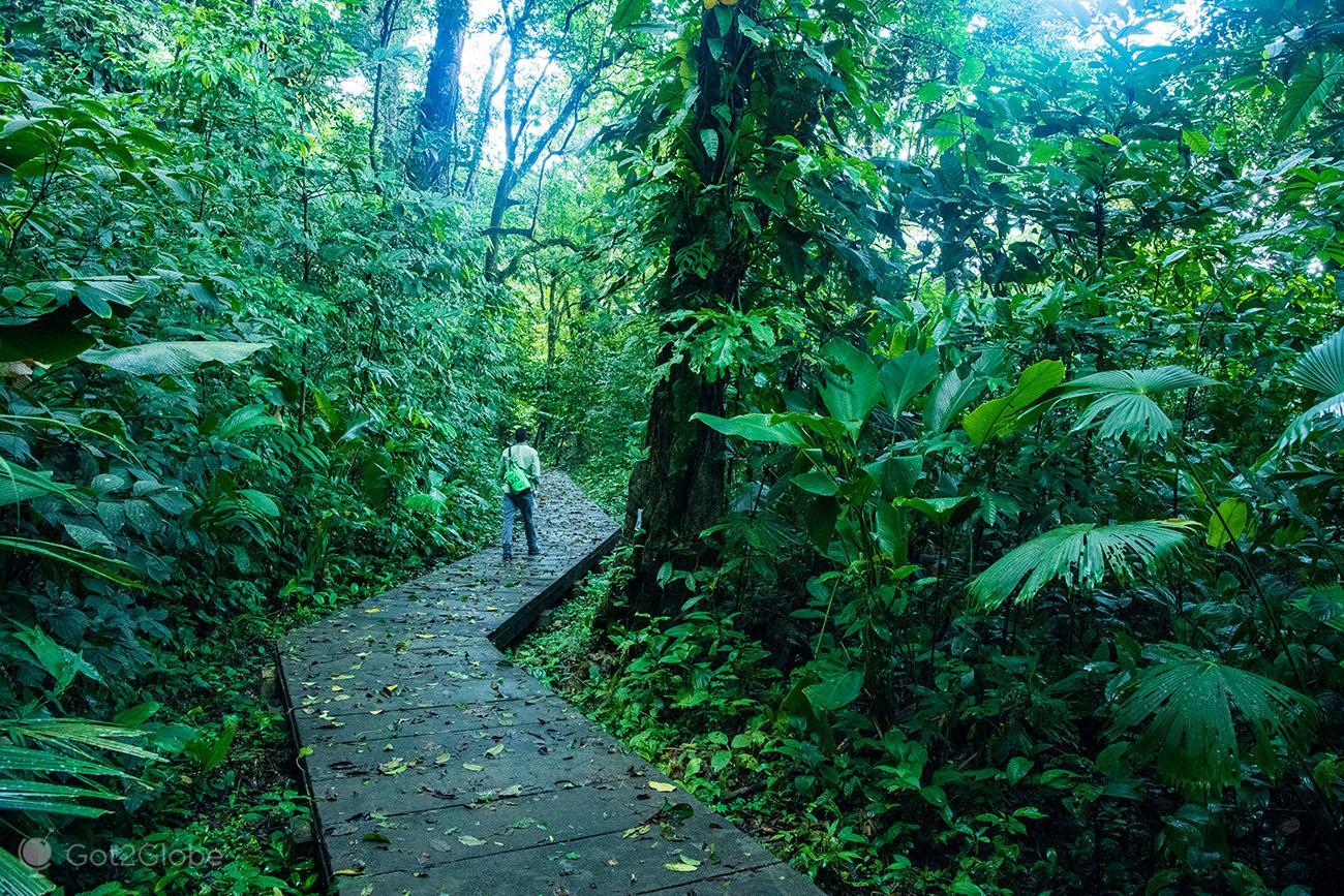 Trilho para o cimo do Cerro Tortuguero,PN Tortuguero, Costa Rica